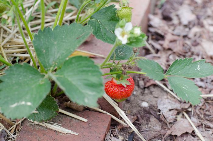 June Garden (52 of 1)